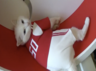 russian world cup predictor achilles the cat