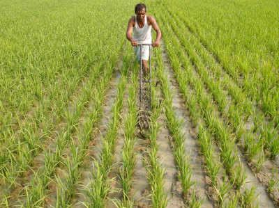 israel: इजरायल की तकनीक से खेती