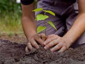 haryana government to give pocket money to students who will make plantation
