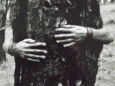 बीजेपी ने 'आप' पर फोड़ा पेड़ों को काटने का ठीकरा