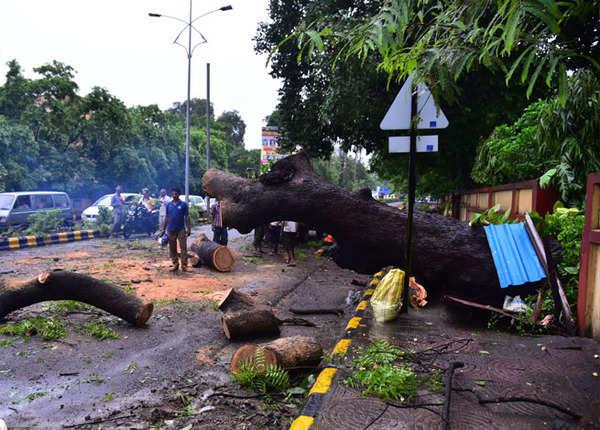 पेड़ गिरे, सड़कें ठप