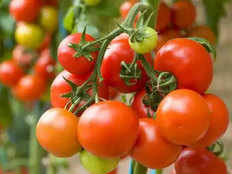 10 tomato a week keep you away from cancer