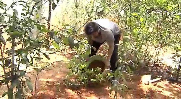 megastar chiranjeevi green challenge to pawan kalyan