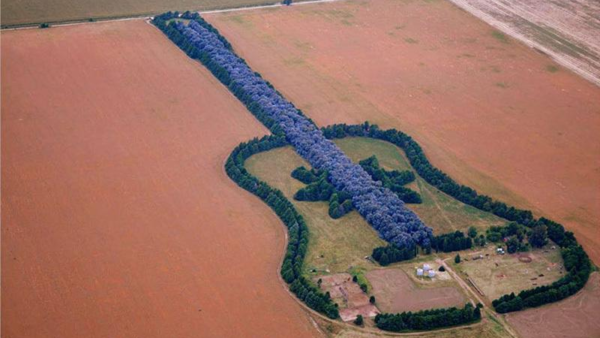 a man planted 7 000 trees to make a guitar shaped forest as tribute to his wife