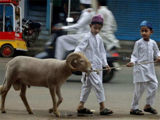 goat1