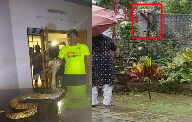 बाढ़ के बाद अब केरल में जहरीले सांपों का खतरा!