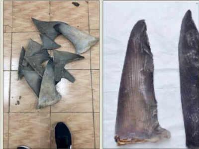 बरामद किए गए शार्क फिन