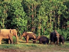 wb woman trampled by jumbo herd can elephants and humans live together