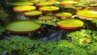 ये हैं दुनिया के सबसे खूबसूरत बॉटनिकल गार्डन, देखते ही मचल उठेगा मन