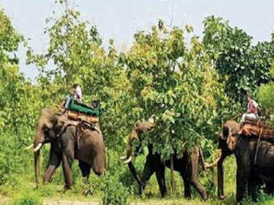 एक और हाथी को टीम में शामिल किया गया है।