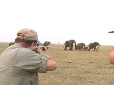 elephants charge at hunters after they shoot