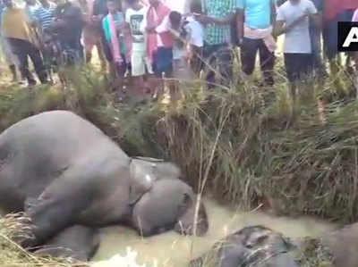 करंट की चपेट में आने से हाथियों की मौत.