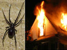 man lights his parents house on fire while trying to kill spiders
