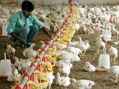 success story of farmers: प्रेरक: अपनी मुर्गी