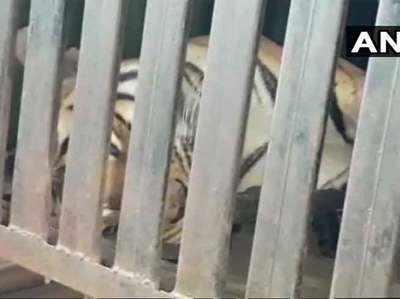 टी1 को हैदराबाद के शार्प शूटर ने मार दी गोली।