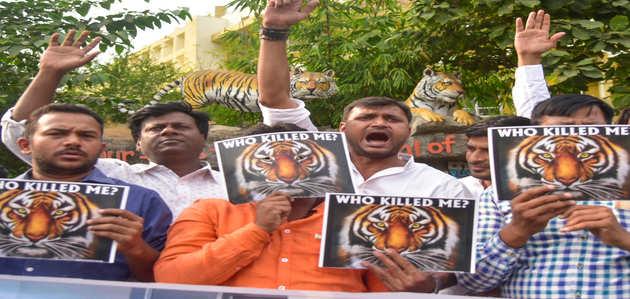बाघिन की हत्या करवाने वाले वन मंत्री को हटाएं देवेंद्र फडणवीस: मेनका गांधी
