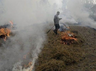 stubble burning ngt directs chief secretaries of 4 states to appear on