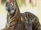 वन विभाग ने आदमख़ोर बाघिन अवनी के शावकों को जिंदा पकड़ने के लिए कोई प्रयास नहीं किया: मेनका गांधी