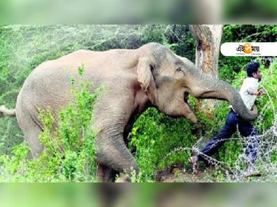 Elephants kill 3