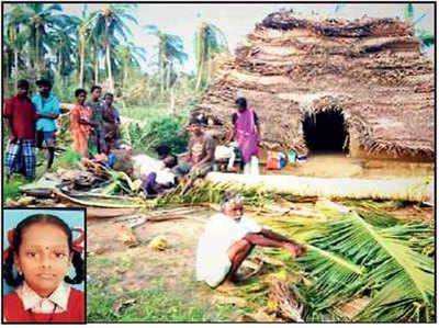गिरा नारियल का पेड़, इनसेट में बच्ची विजया