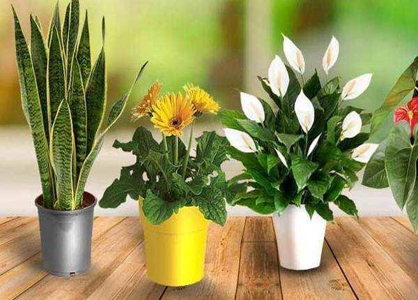 पौधों की लें मदद