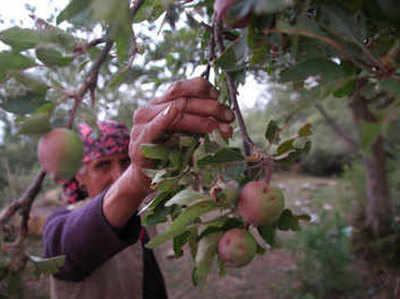 फाइल फोटो: हिमाचल प्रदेश में सेब के फल दिखाती महिला