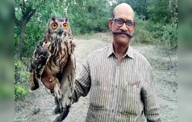 जंगल में आजाद कर दिए गए इंडिन ईगल आउल