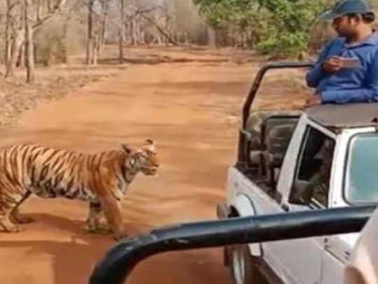 tiger tadoba