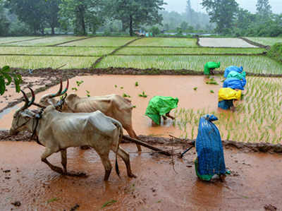 जानें, किन कारणों से कर्जमाफी के बाद भी गरीब हैं किसान
