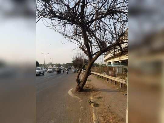 dead trees near milan subway western express highw