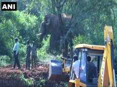 an elephant killed 4 people captured in coimbatore
