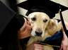 this service dog got honorary diploma for helping his owner to get degree