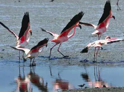 प्रवासी पक्षी (फाइल फोटो)