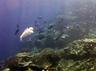 ऑक्सीजन लेवल में हल्का बदलाव भी समुद्री जीवन के लिए खतरनाक