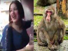 egyptian woman jailed for sexually harassing monkey by touching his genitals