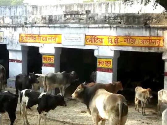 अलीगढ़ के एक स्कूल में बंद आवारा पशु