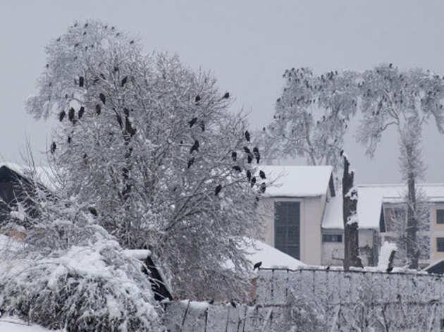 श्रीनगर के बाहरी इलाके में गिरी बर्फ
