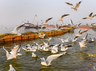 places where kumbh mela celebrated and its religious importance