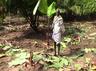 elephants destroy farm land in villages near gudiyatham