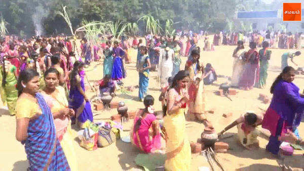 school and college students celebrate pongal festival in salem