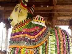 special decoration for lord nandi with 2 tons of vegetables in tanjore temple