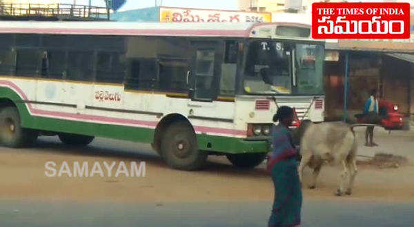 bull fight with bus at wanaparthy