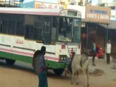 bull fight with bus at wanaparthy bus stand