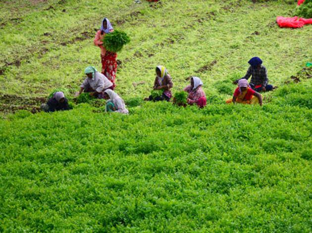 किसानों के सम्मान का मोदी सरकार ने लिया फैसला