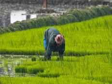 union cabinet likely to approve agri package for farmers on monday to boost their income
