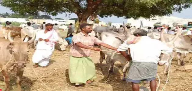 मराठवाड़ा: सूखे के चलते चारा-पानी की कमी, जानवर बेचने को मजबूर लोग