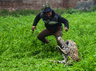 seeing the crowd leopard came in panic rampage in jalandhar punjab
