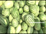 heavy demand for watermelon in krishnagiri