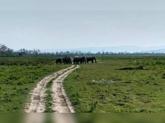 हत्तीच्या कचाट्यात सापडलो!