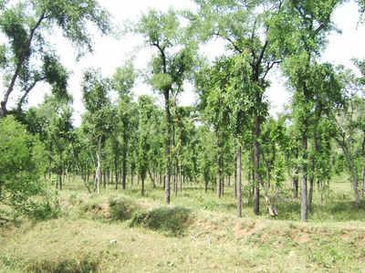 भारत और चीन पेड़-पौधे लगाने में सबसे आगे: Nasa रिपोर्ट